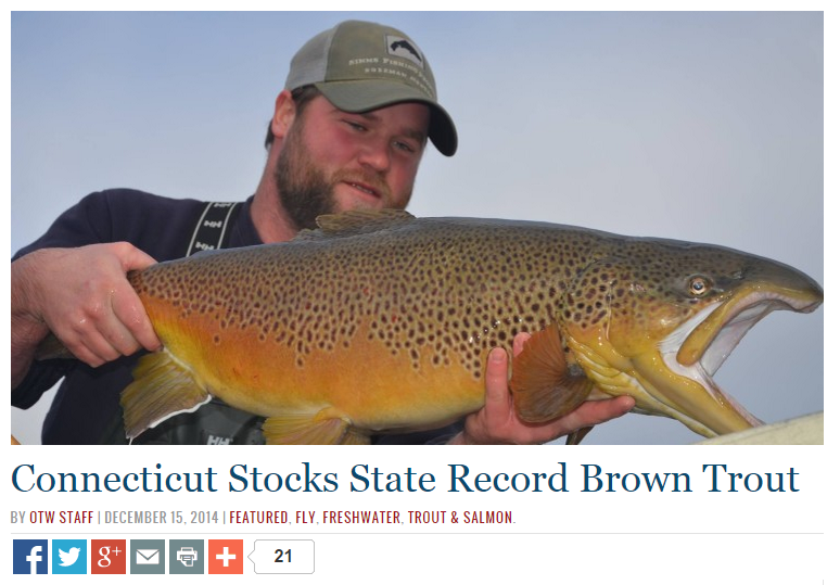 Connecticut stocks new state record brown trout for Best trout fishing in ct